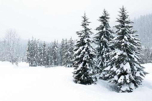 Pine Tree「XL winter forest blizzard」:スマホ壁紙(5)
