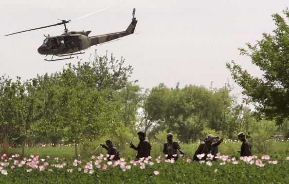 John Moore「Afghan and US Teams Fight Opium Trade In Helmand Province Of Southern Afghanistan」:写真・画像(13)[壁紙.com]