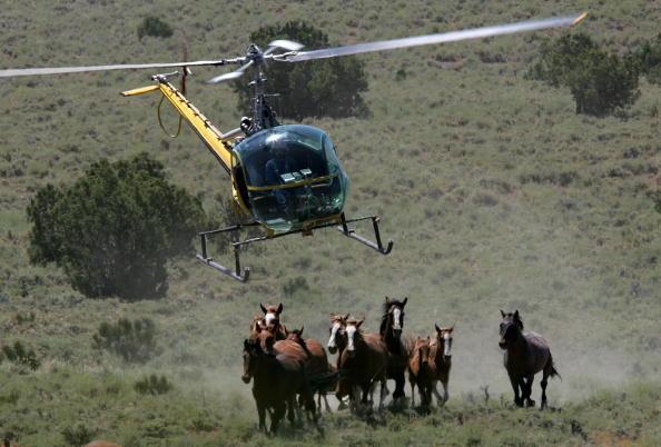 Horse「Bureau Of Land Management Rounds Up Wild Horses」:写真・画像(18)[壁紙.com]
