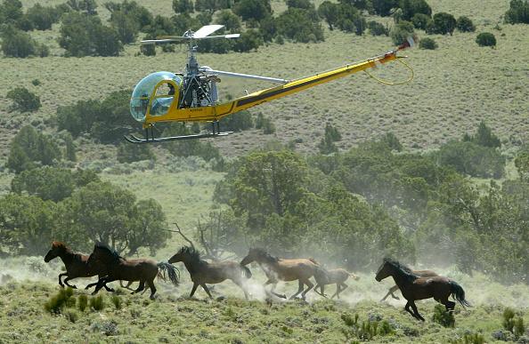 Horse「Bureau Of Land Management Rounds Up Wild Horses」:写真・画像(19)[壁紙.com]