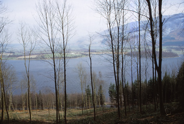 Shallow「Bassenthwaite Lake From The West」:写真・画像(7)[壁紙.com]