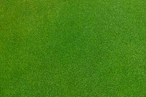 Competition「close up of immaculate grass lawn」:スマホ壁紙(14)