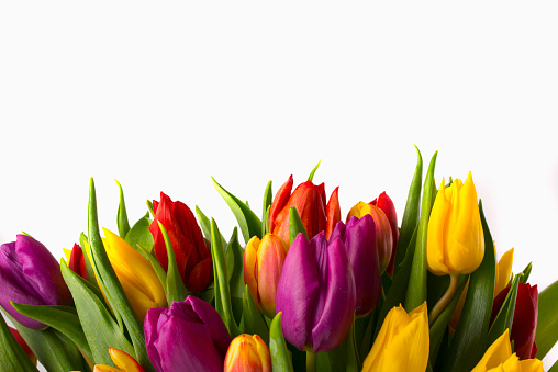 Bunch「Close up of bouquet of tulips」:スマホ壁紙(2)