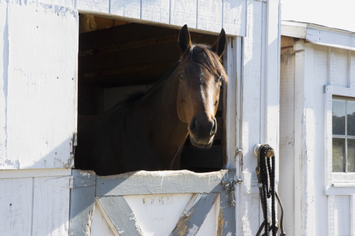 Horse「Horse in barn」:スマホ壁紙(2)