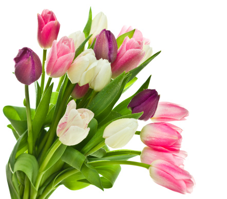Tulip「Tulips」:スマホ壁紙(19)
