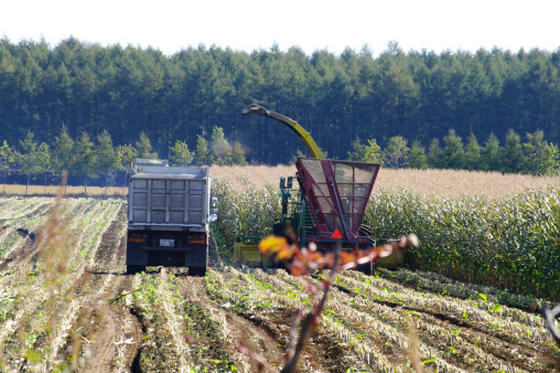 Hokkaido「Corn Crop Being Harvested」:スマホ壁紙(4)
