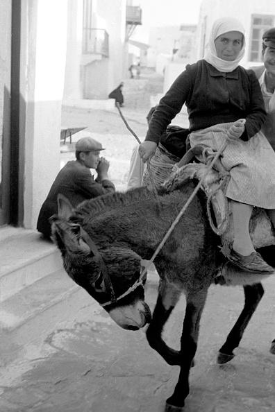 Mammal「Greece」:写真・画像(18)[壁紙.com]