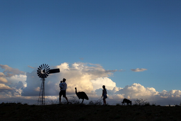 Emu「Record Drought-Declared Throughout The State of Queensland」:写真・画像(4)[壁紙.com]