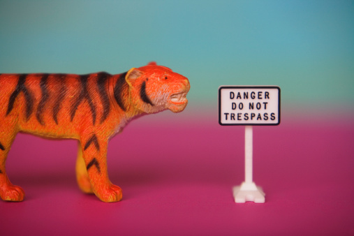 Tiger「Toy tiger and no tresspassing sign」:スマホ壁紙(14)