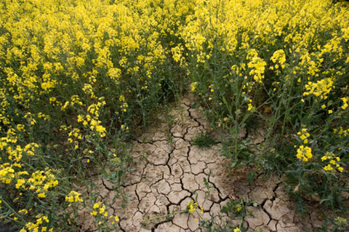Wildflower「Dried earth of rape seed field at time of drought, Oxfordshire, UK」:スマホ壁紙(5)