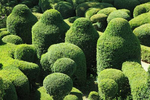 Hedge「France, Dordogne Valley」:スマホ壁紙(17)
