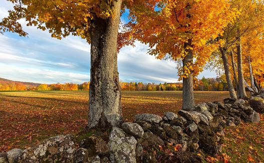 グリーン山脈「バーモント州の石垣とカラフルな秋の木々に囲まれたニューイングランド牧草地」:スマホ壁紙(0)