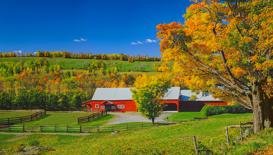 グリーン山脈「サトウカエデの紅葉、バーモント州のニュー イングランドの赤い納屋」:スマホ壁紙(14)