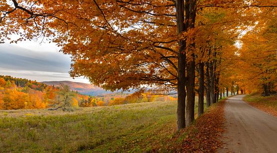 グリーン山脈「バーモント州のメープルツリー沿いのカントリーロード沿いのニューイングランド秋のフィールド」:スマホ壁紙(14)