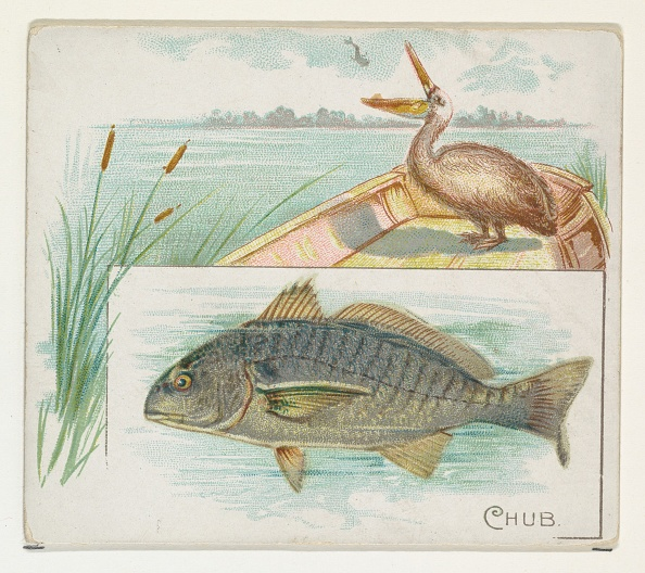 1880-1889「Chub」:写真・画像(16)[壁紙.com]