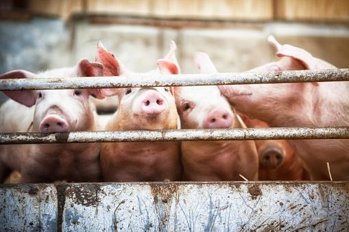 Danish Culture「Four little pigs.」:スマホ壁紙(10)