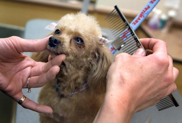 Domestic Animals「Petsmart Stores Show High Earnings」:写真・画像(0)[壁紙.com]