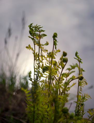 North Brabant「Spring image of young fern plant at lakeside」:スマホ壁紙(11)