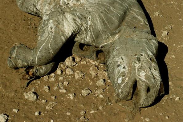 Tom Stoddart Archive「Rhino Poaching」:写真・画像(4)[壁紙.com]