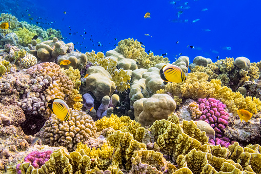 Egypt「Colorful Coral Reef on Red Sea nearby Marsa Alam」:スマホ壁紙(5)