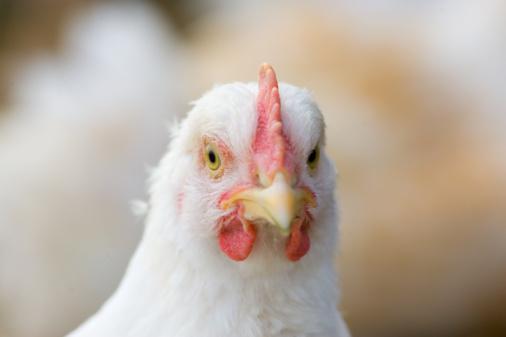 Females「Organic Free-Range Chicken, UK」:スマホ壁紙(11)