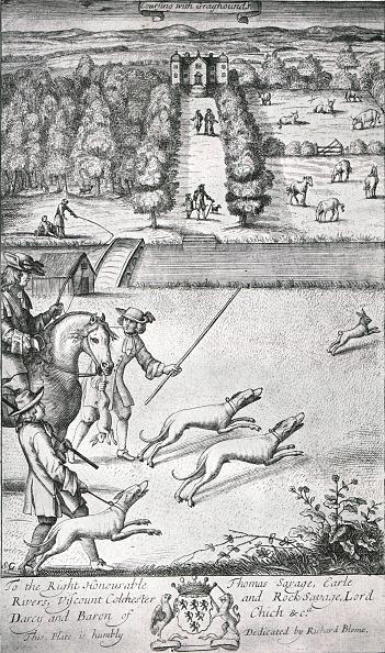 Mammal「Coursing With Grayhounds」:写真・画像(16)[壁紙.com]