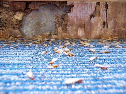 楽園「Damage caused by Termites (series)」:スマホ壁紙(6)