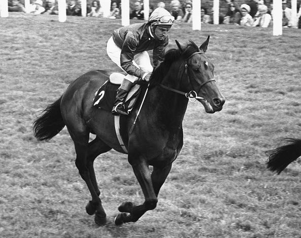 Horse「Joe Mercer And Brigadier Gerard」:写真・画像(15)[壁紙.com]