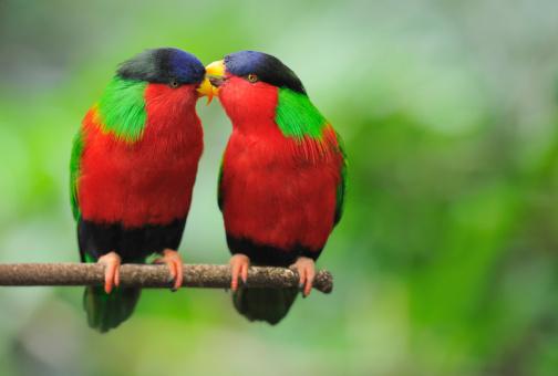 Pets「Love Talks - Parrots Whispering (XXL)」:スマホ壁紙(8)