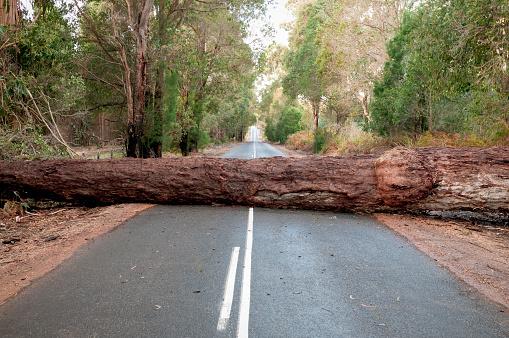 Driving「Fallen Tree Blocking Road」:スマホ壁紙(6)