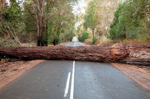 Fallen Tree Blocking Road:スマホ壁紙(壁紙.com)