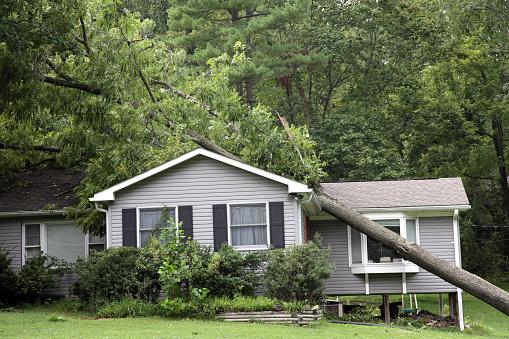 Insurance「Fallen tree on top of grey bungalow house」:スマホ壁紙(18)