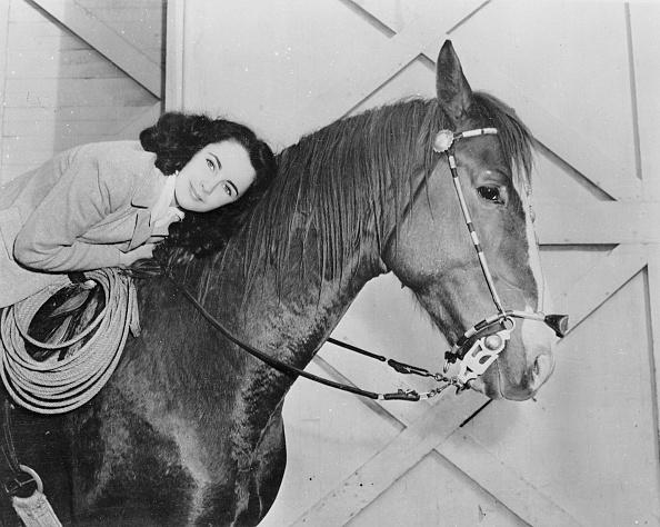 Horse「Taylor In The Saddle」:写真・画像(4)[壁紙.com]