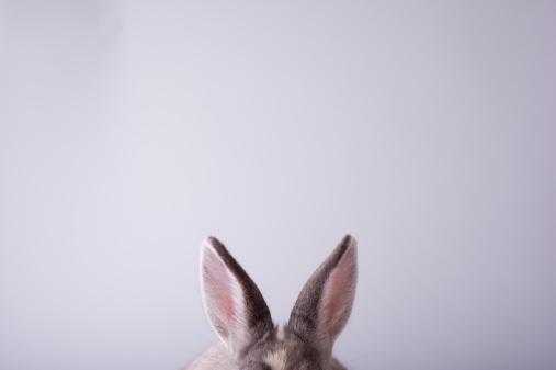 Listening「rabbit,animal,it is pretty」:スマホ壁紙(12)