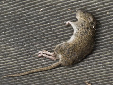 大昔の「Fallen mouse」:スマホ壁紙(3)