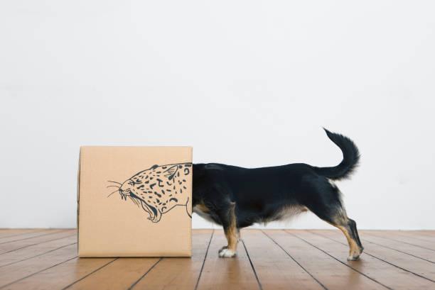 Roaring dog inside a cardboard box painted with a leopard:スマホ壁紙(壁紙.com)