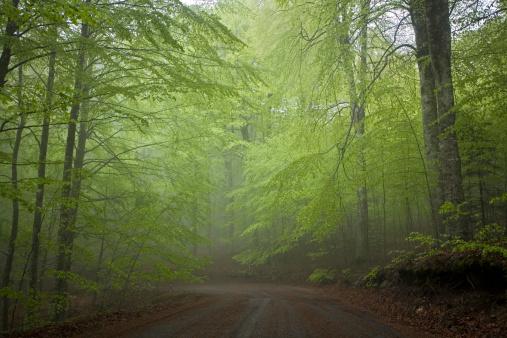 Monte Amiata「Italy, Tuscany, Forest in Italy」:スマホ壁紙(12)