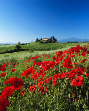 Val d'Orcia「Italy, Tuscany, Val d'Orcia, farmhouse on hill, poppies in foreground」:スマホ壁紙(18)