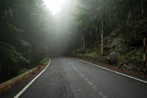 Monte Amiata「Italy, Tuscany, Monte Amiata, Forest and empty road in autumn」:スマホ壁紙(4)