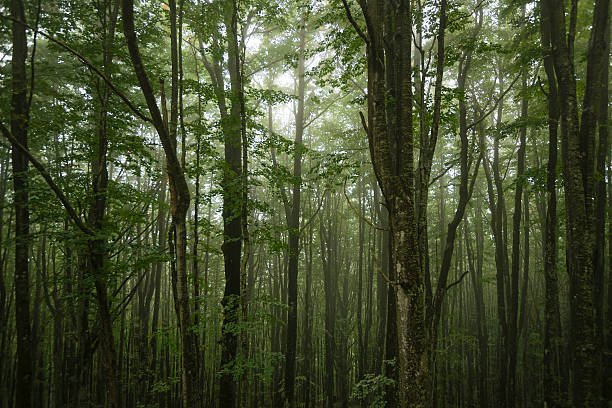 Italy, Tuscany, Monte Amiata, Forest in autumn:スマホ壁紙(壁紙.com)