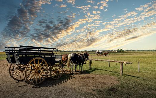 Buenos Aires「Horse carriage in an Argentinian farm」:スマホ壁紙(19)