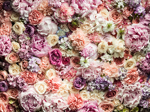 Pastel「Various cut flowers」:スマホ壁紙(17)