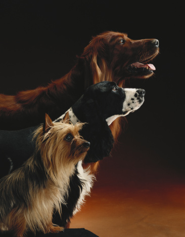 1980-1989「Three dogs」:スマホ壁紙(4)