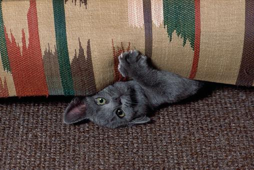 1990-1999「Kitten named Gus playing under furniture」:スマホ壁紙(10)