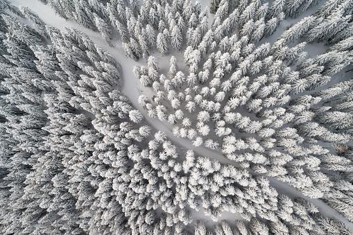 Dirt Road「Snow Trail leading through Winter Forest, Bird's-Eye View」:スマホ壁紙(12)