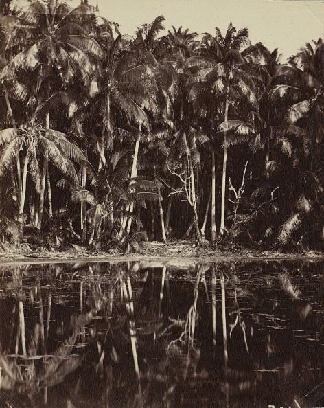 1880-1889「Tetiaroa - Un Lagon Des Paumotu」:写真・画像(11)[壁紙.com]