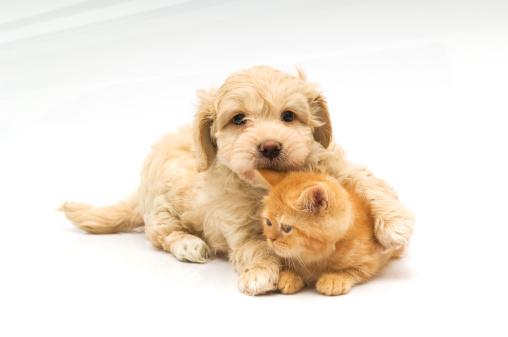 Puppy「little bite,」:スマホ壁紙(19)