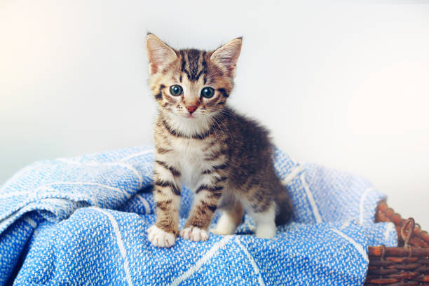 All paws down, I'm the cutest:スマホ壁紙(壁紙.com)
