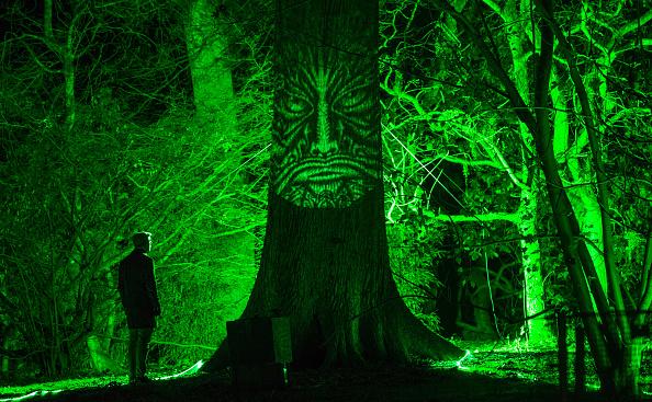 Tree「Enchanted Christmas Is Launched At Westonbirt Arboretum」:写真・画像(19)[壁紙.com]