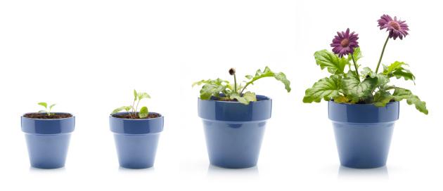 Continuity「Gerbera Daisy Growing」:スマホ壁紙(2)
